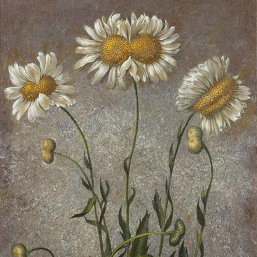 07 洛朗·格拉索 未来植物标本